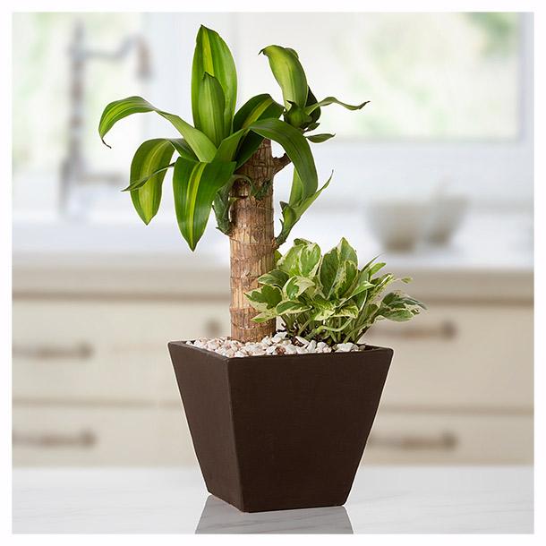 5 plantas ideales para tu oficina y muy ben ficas para t for Plantas decorativas para oficina